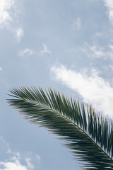 palm trees against blue sky. palm tree leaves at tropical coast, vintage toned and stylized, coconut tree,summer tree ,retro, ideal background. enough room for copy, space and text
