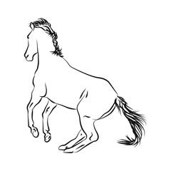horse outline  monochrome