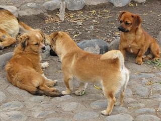 Filhotes de cachorro na rua