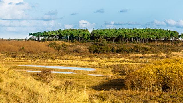 Nationalpark Zuid-Kennemerland – nördlich von Zandvoort (Holland)