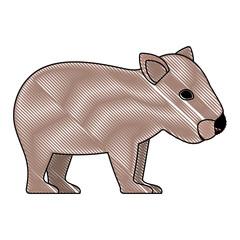 wild wombat australian creature