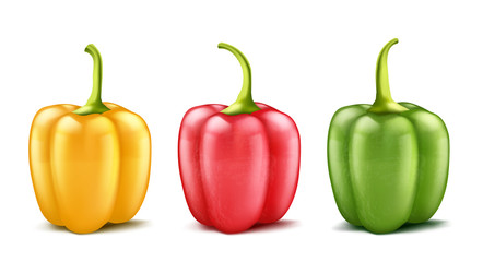Vector set of three realistic bell peppers or bulgarian, red, green and yellow isolated on background. Whole pod of sweet pepper, vegetable for cooking and eating, organic food for vegetarians