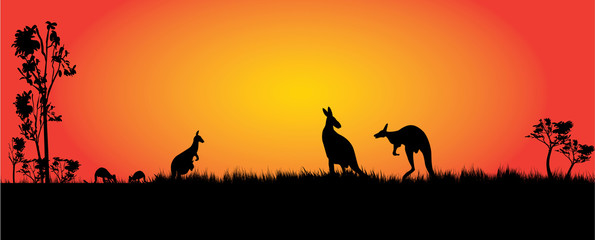 kangaroos feeding in the sunset