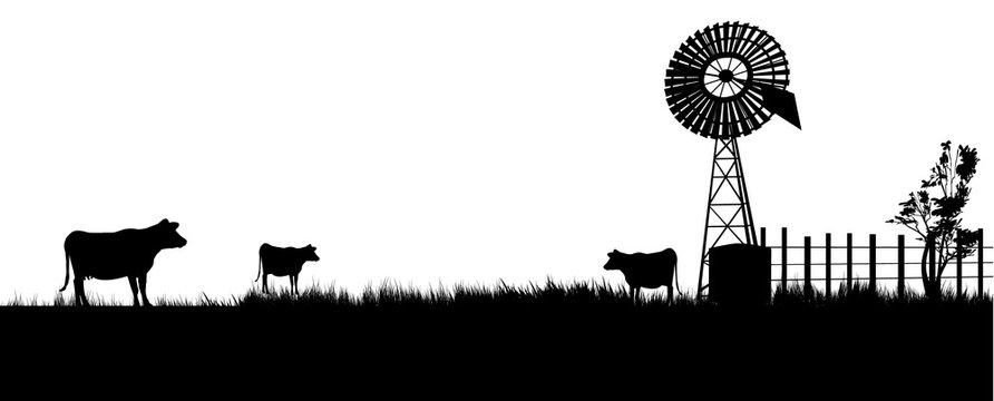cows walking toward the windmill