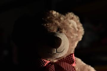 Half Lit Bear