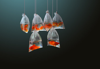 Six small red fishes in polyethylene bags hanging on ropes