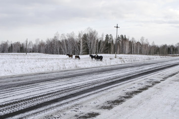 A herd of horses in the winter on the road