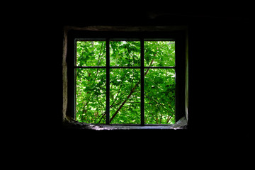 a window in an abandoned production building through which young foliage can be seen