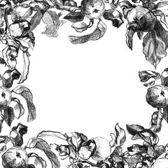 frame of drawings of apples with leaves in pencil