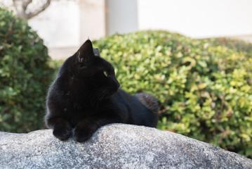 石の上でくつろぐ黒猫