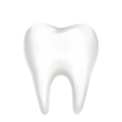 Realistic molar tooth on white background. Vector illustration