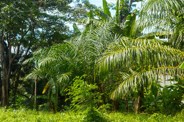 Tropical forest, trees