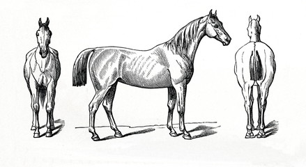 Equine conformation - horse's normal posture (from Meyers Lexikon, 1896, 13/770/771)