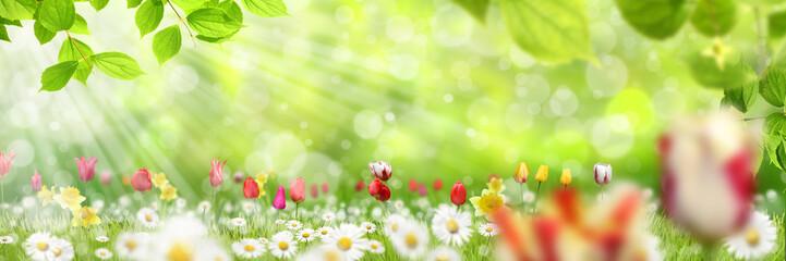 Frühling 431
