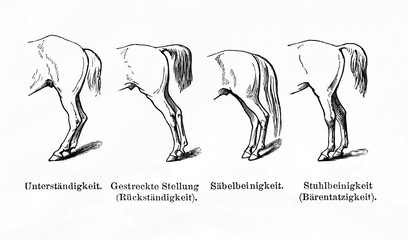 Defects of hind legs (from Meyers Lexikon, 1896, 13/770/771)