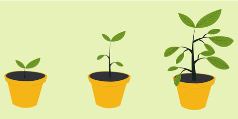 Growth concept. Plant growing stages. Timeline infographic of planting tree process. Green plant flower, graphic gardening seedling plant.