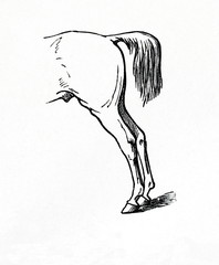 Stretched position of hind legs (from Meyers Lexikon, 1896, 13/770/771)