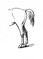 Bear's gait (from Meyers Lexikon, 1896, 13/770/771)