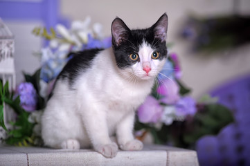 white with black kitten and lilac flowers