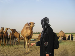 camel concept. camels in the desert. girl is looking at he camel.