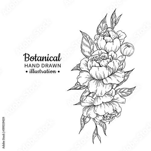 Wedding Flower Line Drawing : Quot vintage flower bouquet vector drawing peony rose