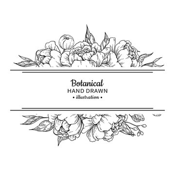 Flower vintage border. Vector peony and roses botanical drawing.