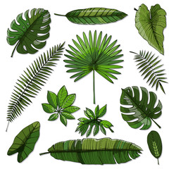 Set of green tropical leaf