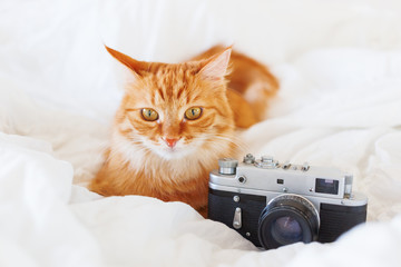 Cute ginger cat lying in bed with old fashioned film camera. Fluffy pet with retro device. Cozy home background.