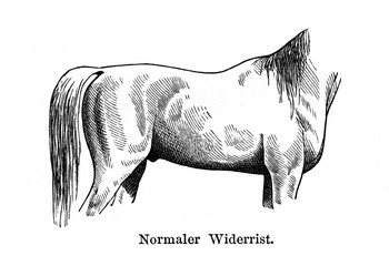 Normal withers (from Meyers Lexikon, 1896, 13/770/771)