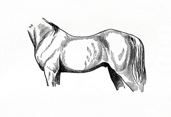 Sway-backed horse (from Meyers Lexikon, 1896, 13/770/771)