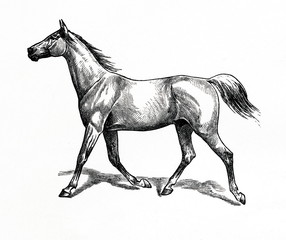 Horse gait - slow trot (from Meyers Lexikon, 1896, 13/770/771)