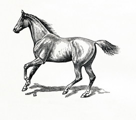 Horse gait - gallop (from Meyers Lexikon, 1896, 13/770/771)
