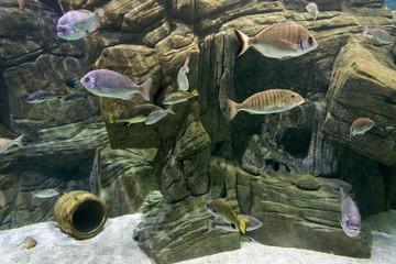 """Various fish species at """"cretaquarium"""" in Heraklion, Crete"""