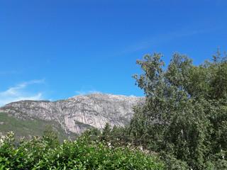 Berggipfel hinter grünen Bäumen