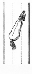 Horse's way of walking - shoulder-out (from Meyers Lexikon, 1896, 13/770/771)