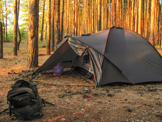 Camping tent and backpack in morning pine forest