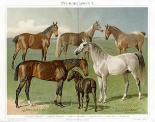 Horse breeds I (from Meyers Lexikon, 1896, 13/772/773)