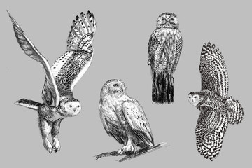 Black and white freehand sketch drawing of snow owl
