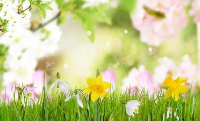 Frühling Hintergrund Schneeglöckchen