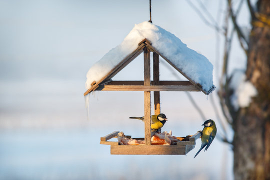 Two tit in the snowy winter bird feeder eating pork fat