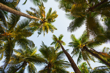 Green palm trees against the blue sky