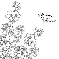 Vector corner bouquet with outline blooming Apricot flower bunch in black isolated on white background. Ornate blossom branch of Apricot flowers in contour style for spring design and coloring book.