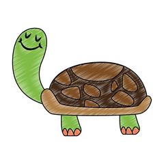Funny turtle cartoon vector illustration graphic design