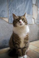 Niedliche Katze Portrait