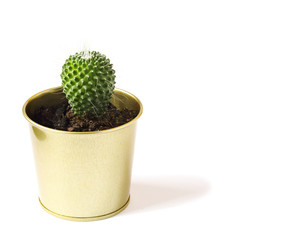 Cactus plant in pot isolated on white background