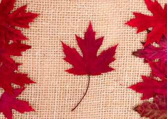 Canada Day. Red maple leaves in shape of Canadian Flag on burlap background