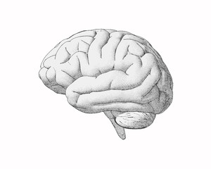 Monochrome vintage drawing brain illustration