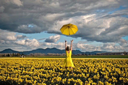 Happy woman in daffodil field with yellow umbrella. Tulip festival near Seattle. Washington. United States.