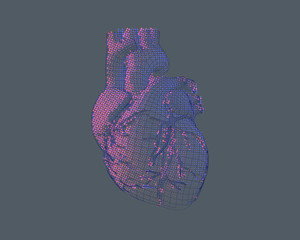 Stylized wireframe human heart illustration