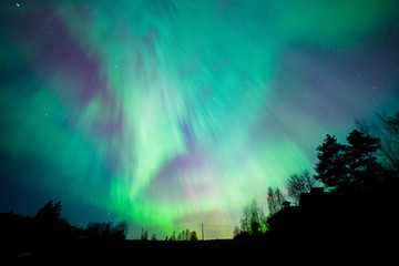 Northern lights aurora borealis tree landscape at night